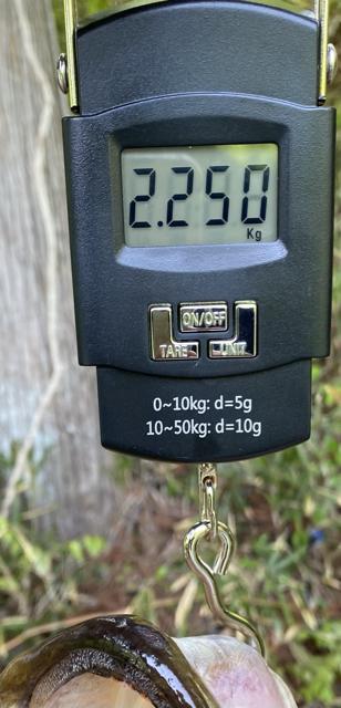 853768F4-D60C-42E6-BFE6-E194C4D473D0.jpg